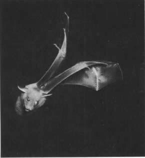 Lesson 7 Bats 蝙蝠